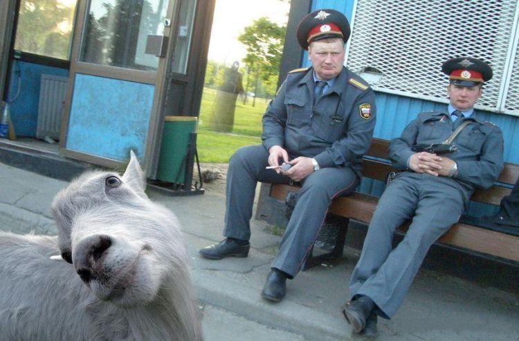 policegoat