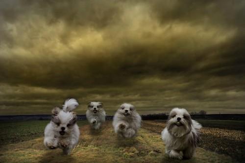 dogs_apocalypse