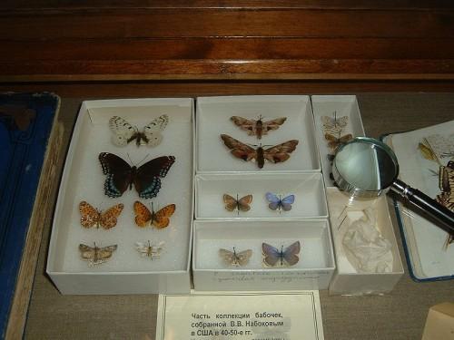 800px-Nabokovs_butterflies.JPG