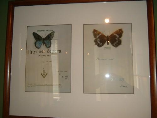Nabokovs_Butterflies_3.JPG