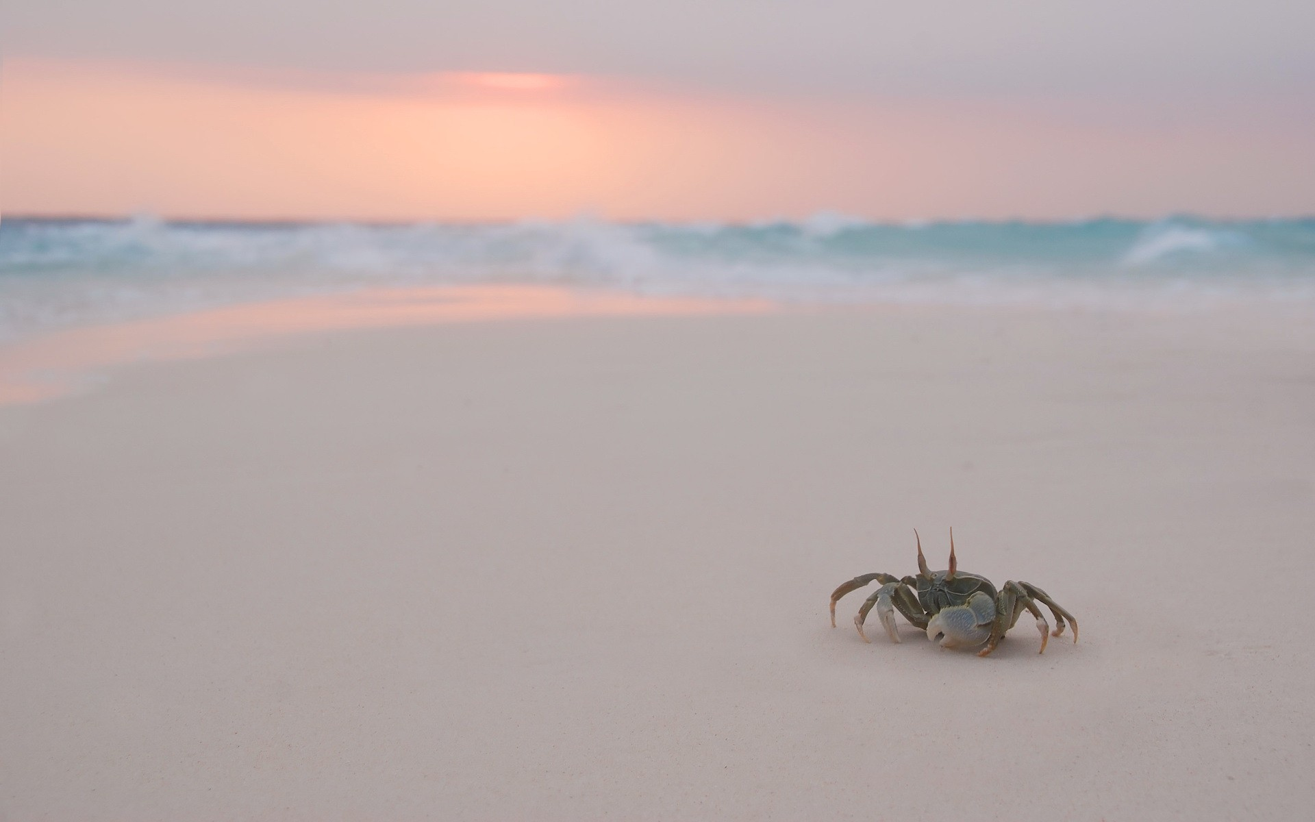 Crab-Walking-On-A-Beach-Wallpaper