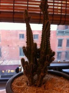 """""""power cactus"""""""