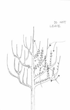 Tree--Miranda-Polley-illustrator