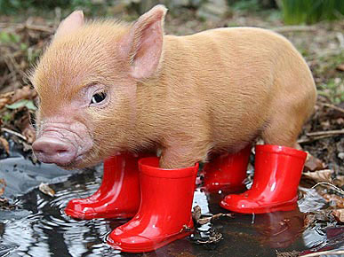 pig_in_boots_070110_m